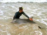 Briano rescued 'Kingy' the dolphin when he was entangled in shark nets off Kings Beach