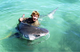 <img:http://www.crocone.com.au/images/ultimate_sharks.jpg>